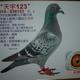 創作者 展聖翔聯合鴿舍 的頭像