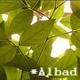 創作者 Albad 的頭像