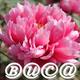 創作者 Buca 的頭像