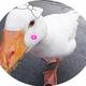 創作者 黃小鴨 的頭像