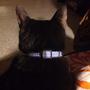 黑貓不理人