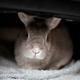 創作者 麻吉小兔 的頭像