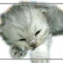 古馳貓® 圖像