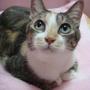 lovecat523