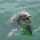 海豚play 圖像