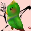小鈍鸚 圖像