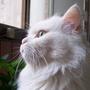 mjscat