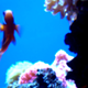 創作者 *GoliFish 的頭像