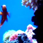 *GoliFish