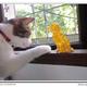 創作者 柚子貓 的頭像