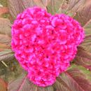 LoveNPeace 圖像