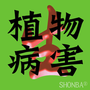 SHONBA