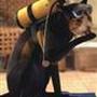 submarinecat