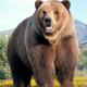 創作者 棕熊 的頭像