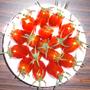共好番茄園