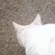 創作者 whitecat417 的頭像